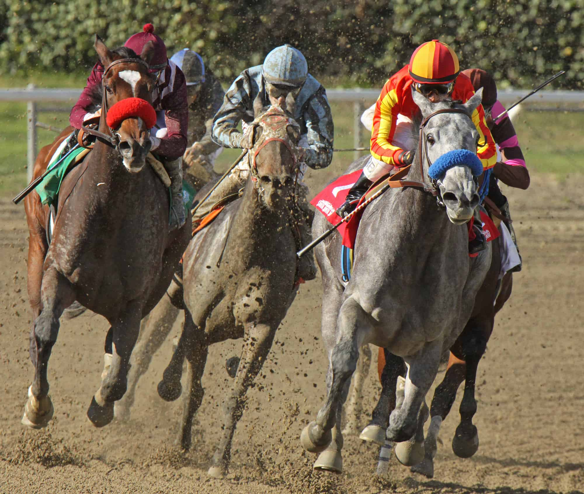 Where to bet on the Breeders Cup online
