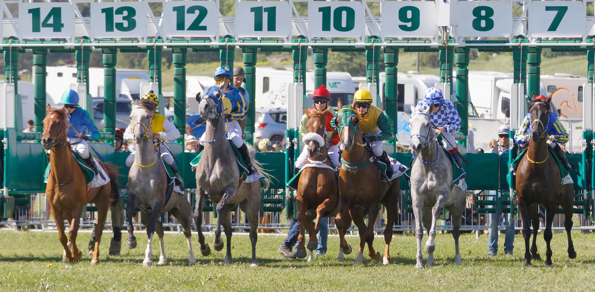 Show Bet Horse Racing